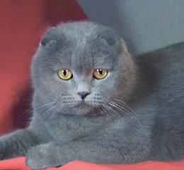 http://www.catstyle2005.narod.ru/bonnii1.jpg